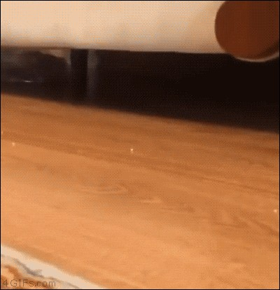 Cat scratching couch