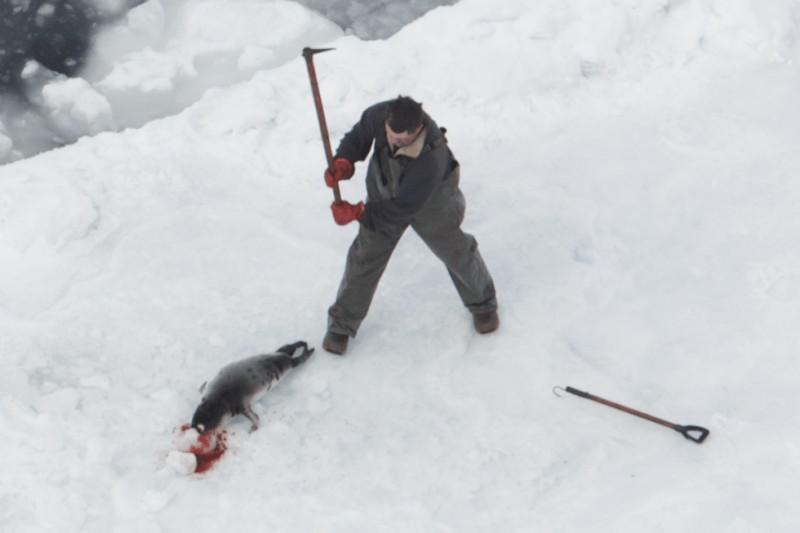A sealer killing a baby harp seal