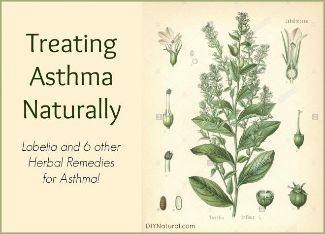 How to Treat Asthma Naturally at Home With Herbs