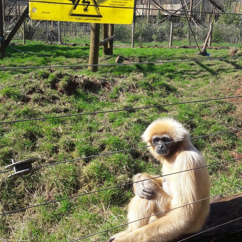 Zoo Where Almost 500 Animals Died Remains Open