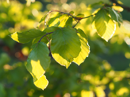 10 reasons to plant a tree