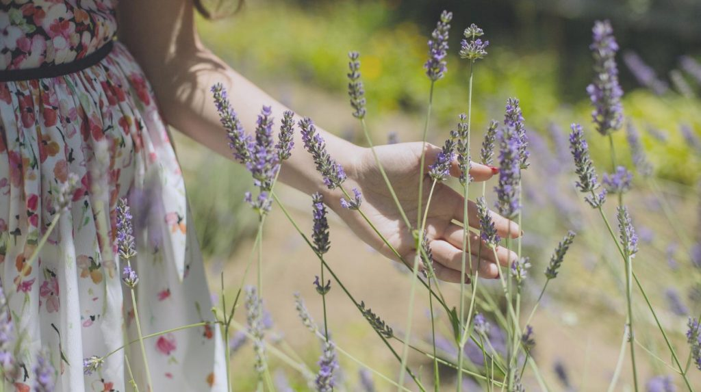 9 Herbs For A Stress-Free Life