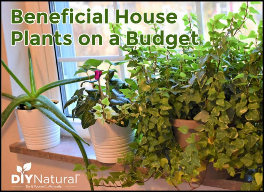 3 Ways to Find Beneficial Indoor Plants on a Budget