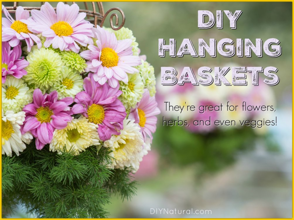 Learn How To Create Beautiful DIY Hanging Baskets