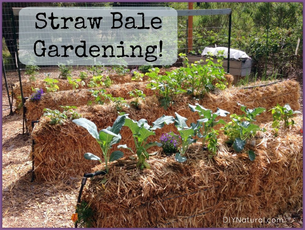 Straw Bale Gardening: An Easy Way To Grow Food