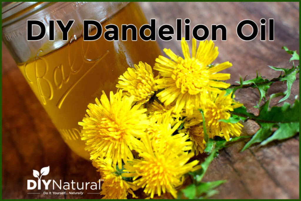 DIY Dandelion Oil for Sore Muscles and Stiff Joints