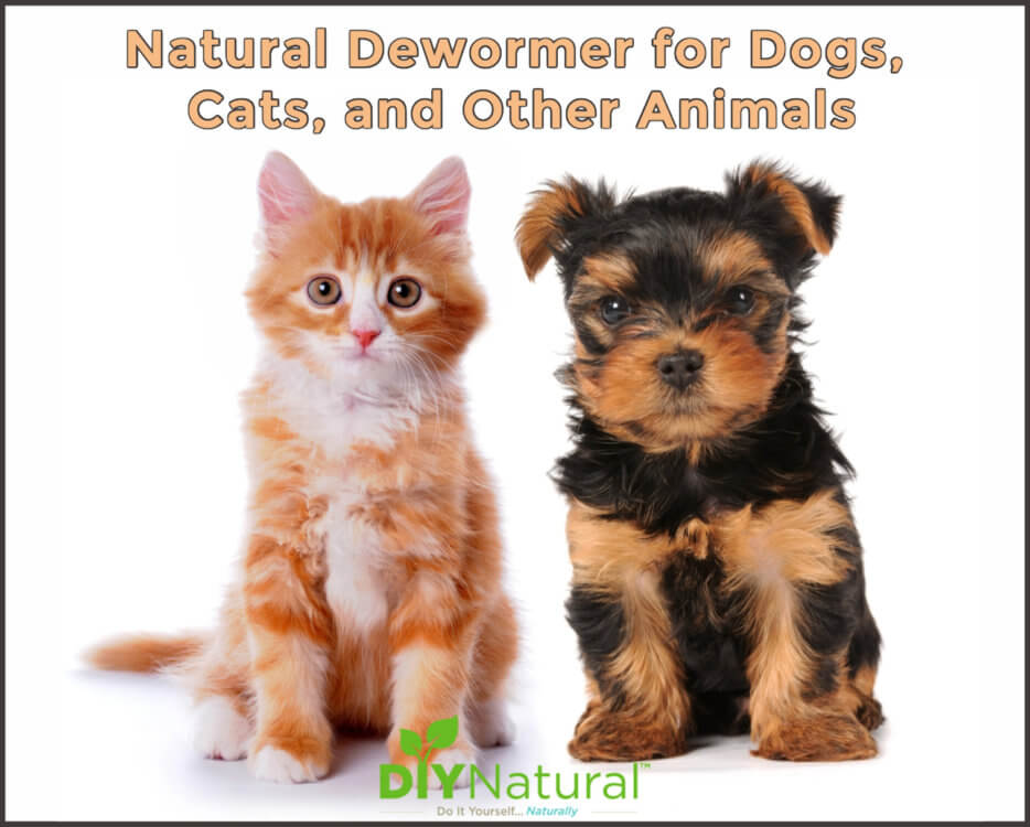 A Homemade, Natural Dewormer for Dogs and Cats