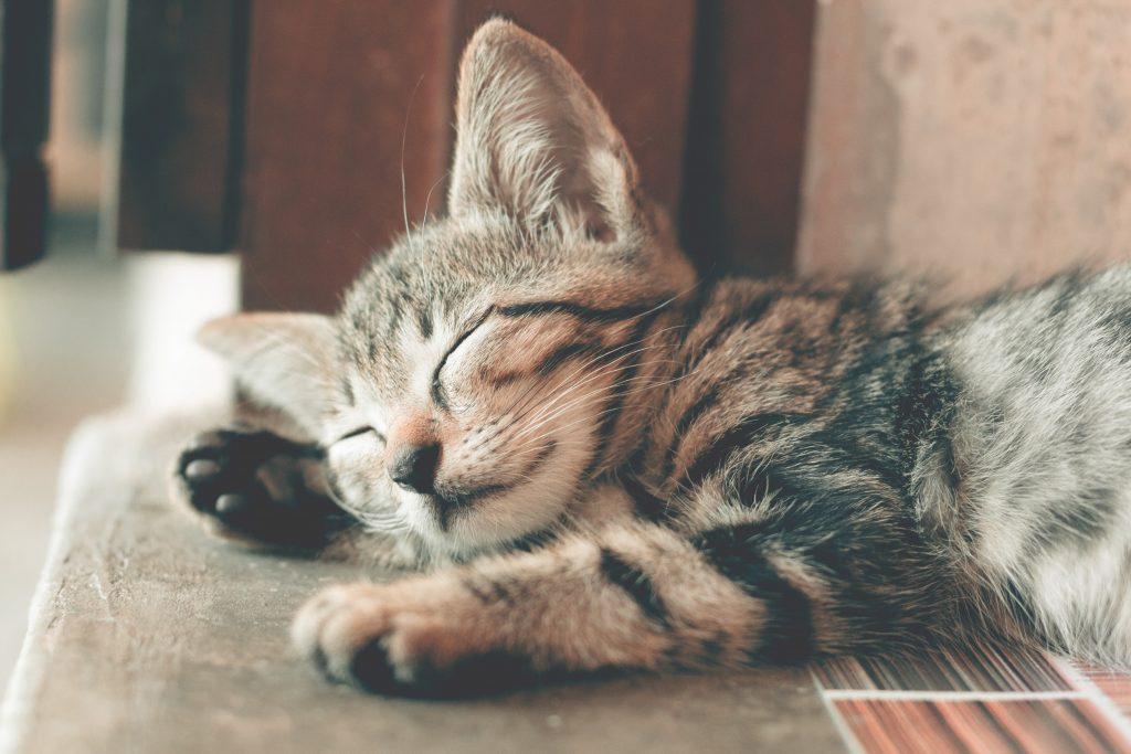 ADOPT CAT IN UK